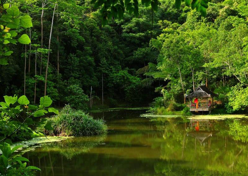 Тропический ботанический сад в Сишуанбаньна