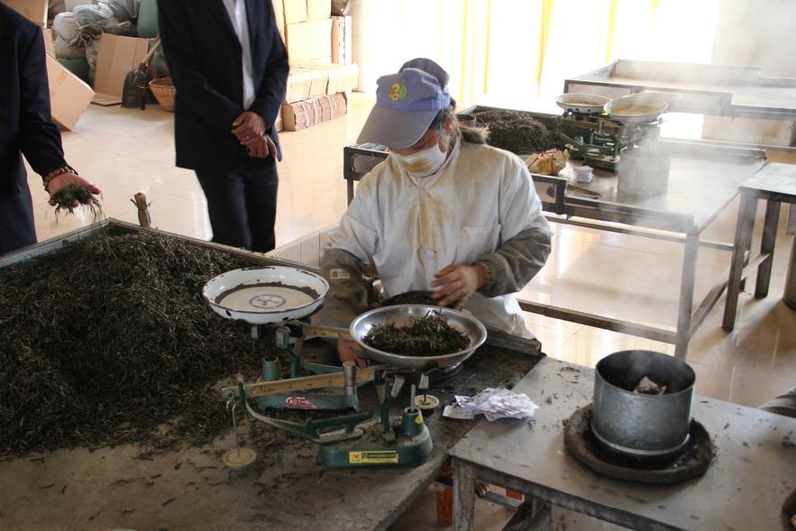 Производство чая на чайной фабрике