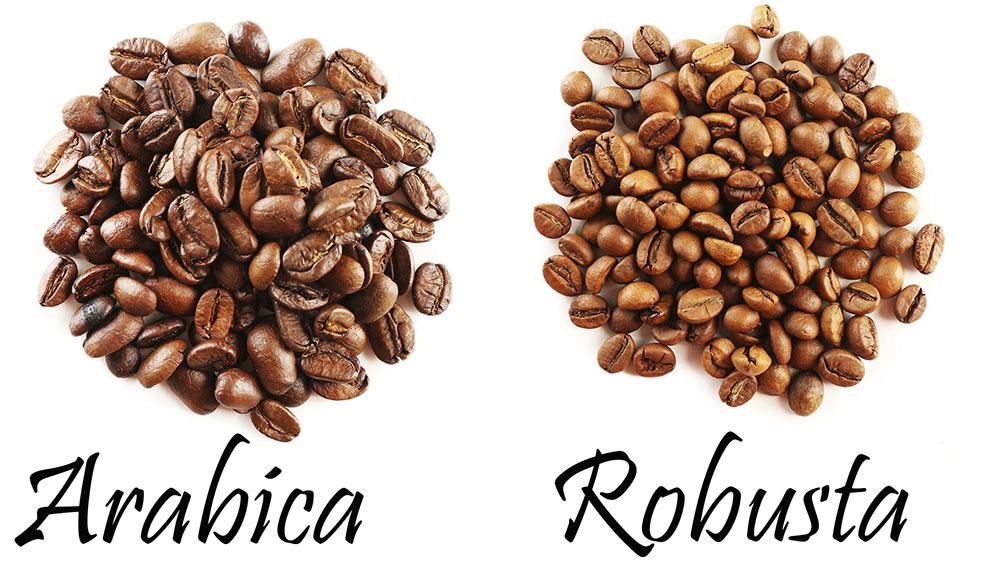 Вся кофейная индустрия стоит на двух слонах - арабике и робусте