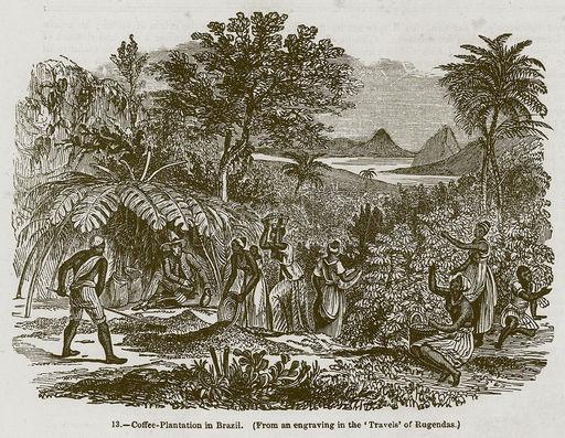 Труд на кофейной плантации в Бразилии