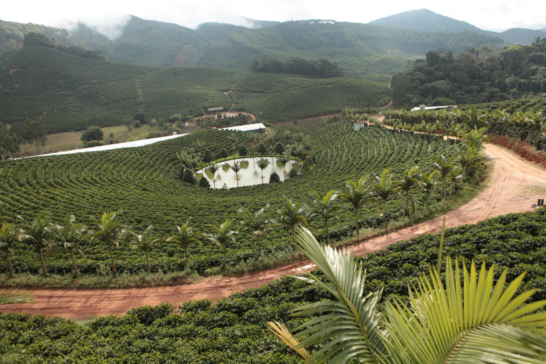 Кофейная плантация в Эспириту-Санту