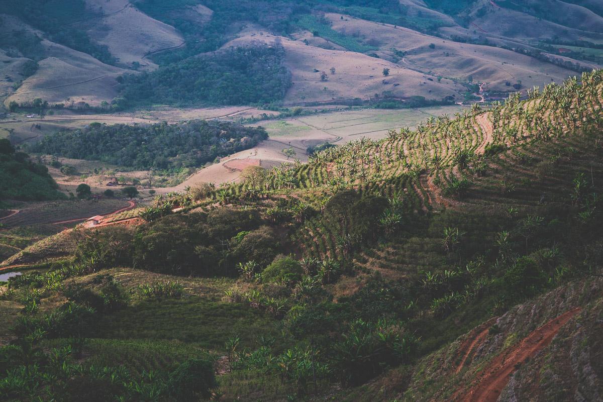 Террасирование кофейных плантаций