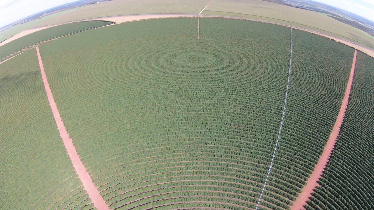 Система полива плантации движется по кругу. Ряды кофейных деревьев тоже высажены по кругу.