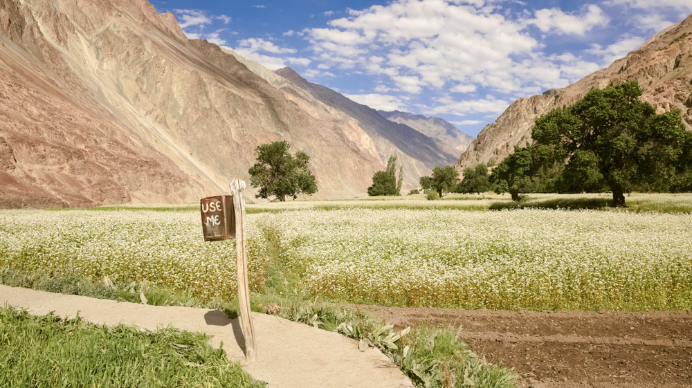Himalayas - Fagopyrum tataricum field