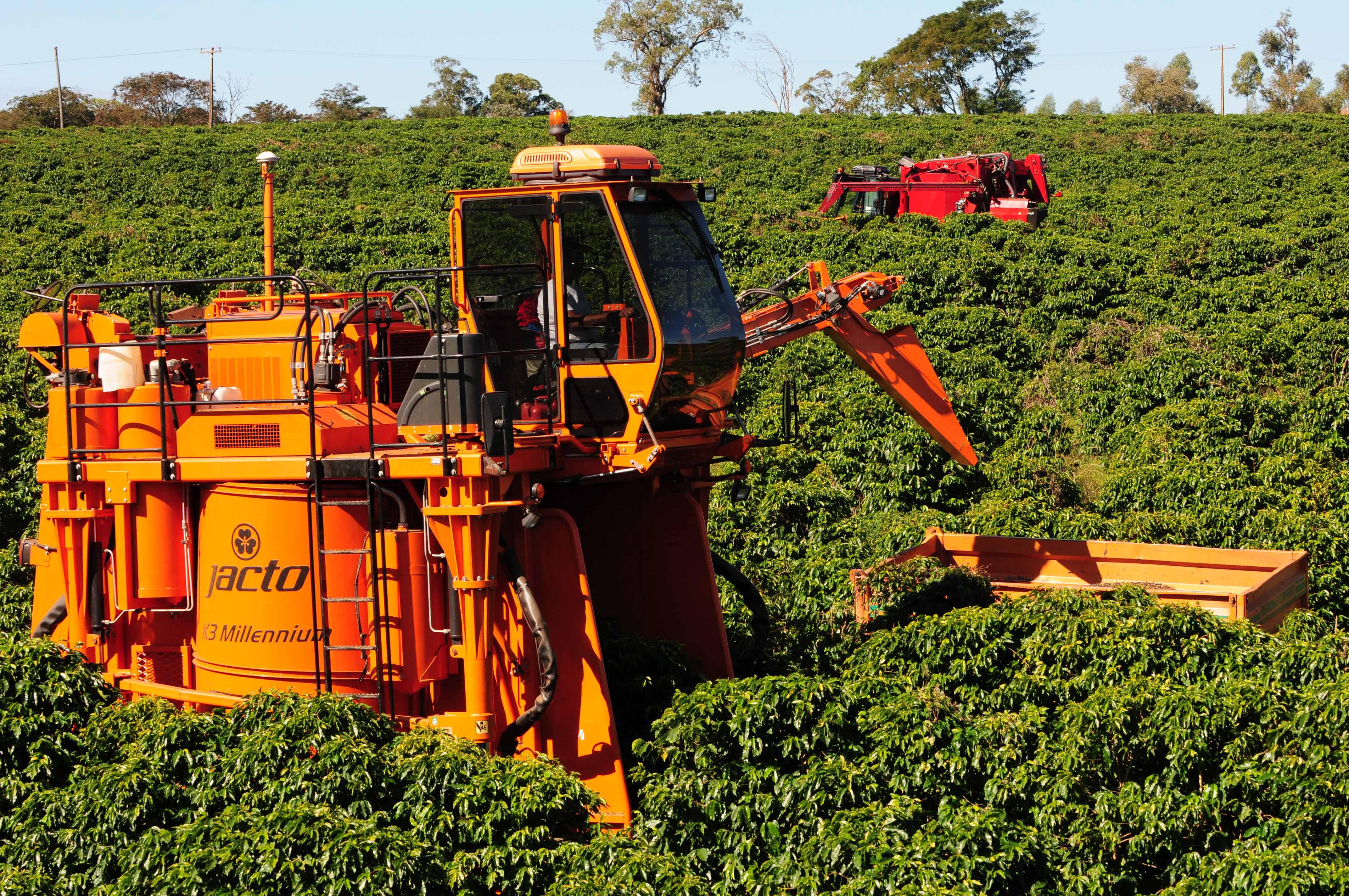 Сбор урожая кофе с помощью техники