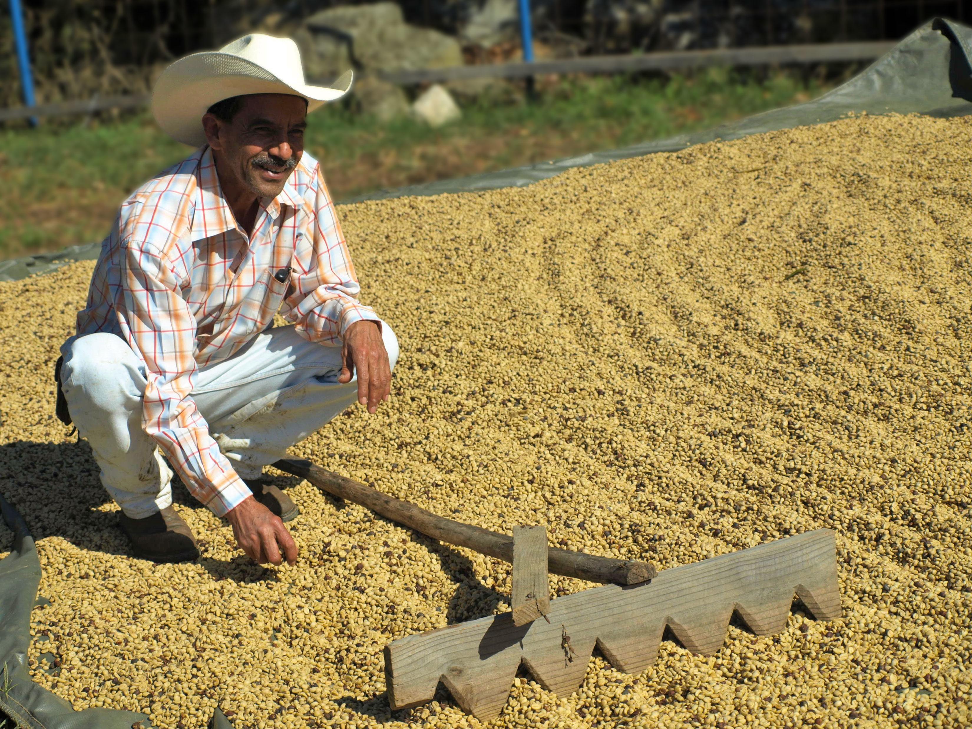 rastelo - грабли для сушки кофе