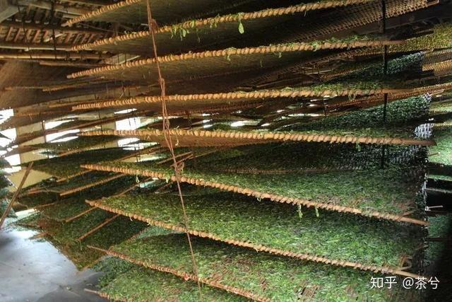 Фото процесса естественного завяливания чайного листа в помещении