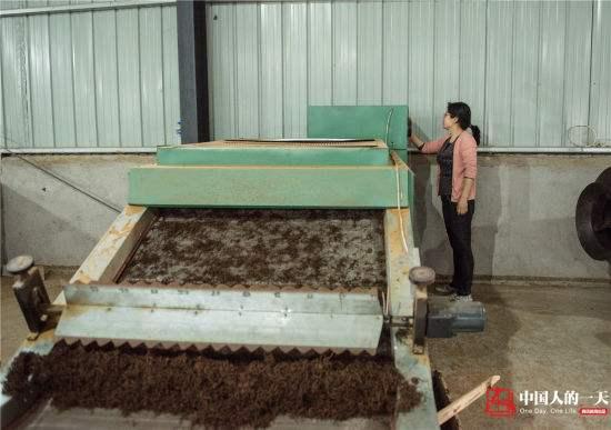 Фото процесса сушки красного (черного) чая