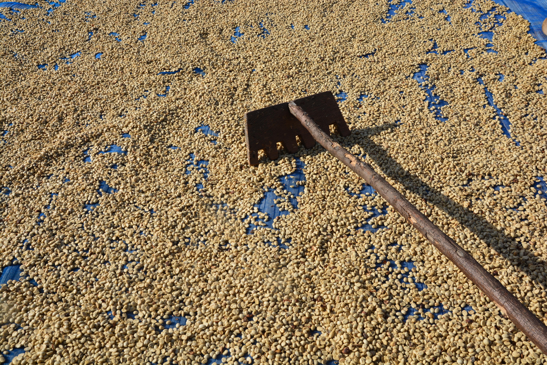 rodo - садовая мотыга или тяпка для сушки кофе