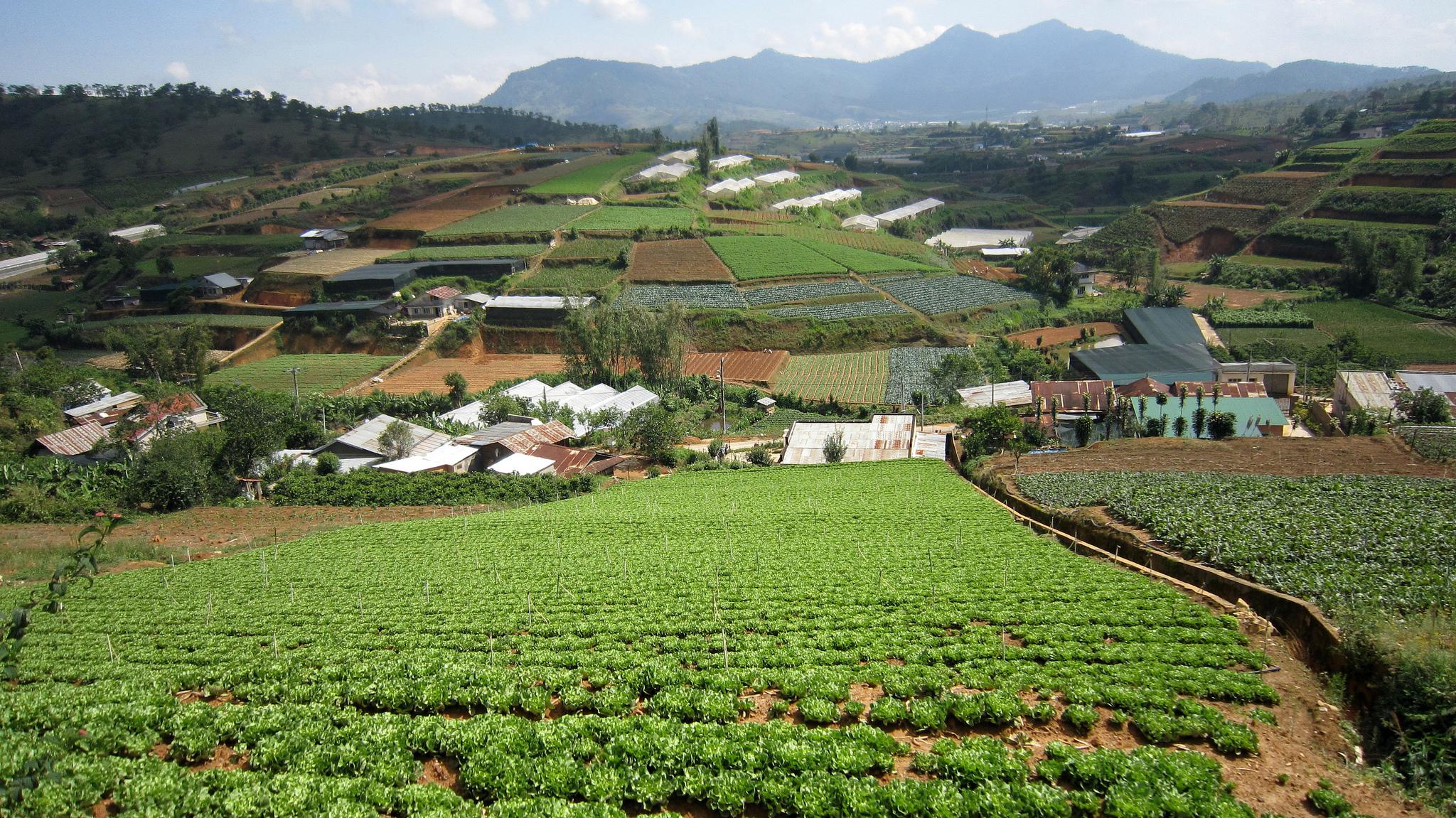 Кофейная плантация на Центральном Нагорье Вьетнама