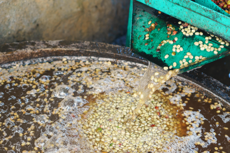 На этапе ферментации происходит отслоение клейковины от кофейного зерна
